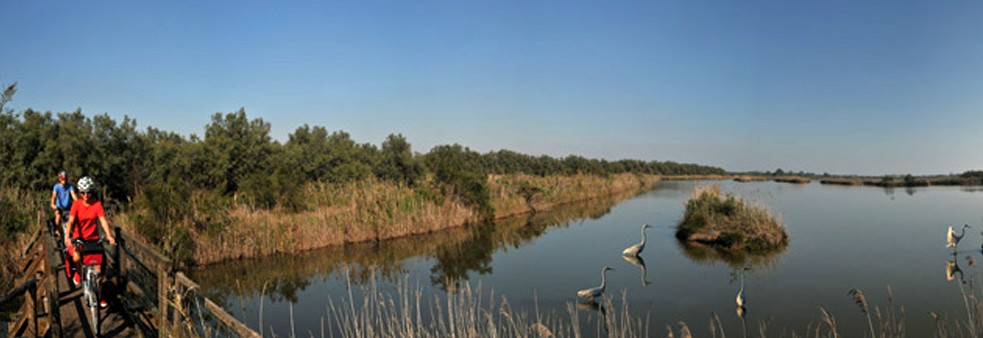 Cycling and birdwatching in the Po Delta