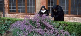 Ferrara and places of Faith