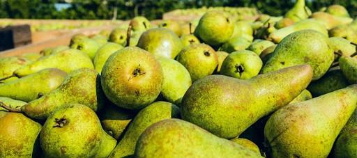 Pear from Emilia-Romagna - IGP