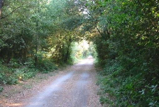 Pineda de Volano - Reserva Natural
