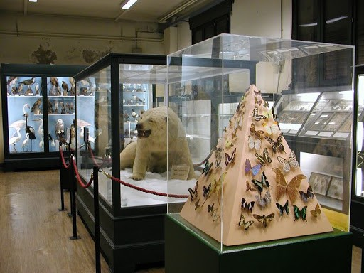 Museo Municipal de Historia Natural
