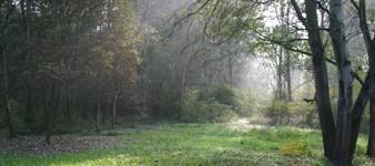 Descubriendo el Bosque de las trufas