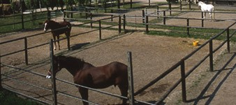 "Ranch ""La Negrella"""