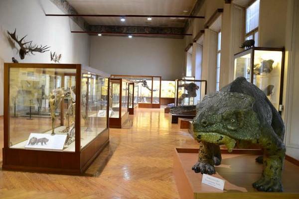"""Museo di Paleontologia e Preistoria """"Piero Leonardi"""""""