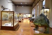 Museo Piero Leonardi