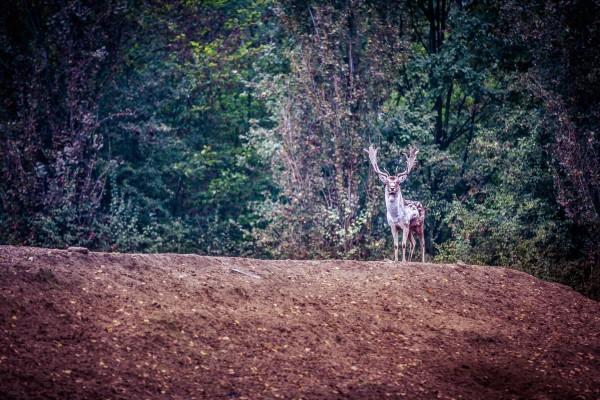 Riserva Naturale Bosco della Mesola - Parco Delta del Po
