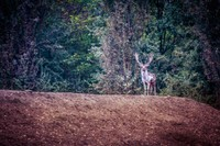 La Riserva Naturale del Gran Bosco della Mesola, con una superficie di 1.058 ettari, rappresenta uno degli ultimi e meglio conservati residui di bosco di pianura, memoria delle antiche foreste che si trovavano fino a qualche secolo fa lungo la costa adriatica.