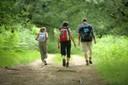 Camminate nei boschi
