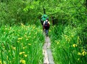 Escursioni nel verde delle oasi